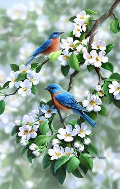 Colorful birds with withe flowers. the beauty of nature