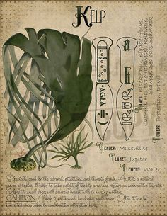 Plant Magic, Magic Herbs, Herbal Magic, Wiccan Spell Book, Wiccan Spells, Pagan Witch, Witches, Grimoire Book, Witch Herbs