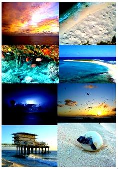 Birds Island Collage, Venezuela