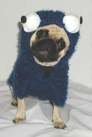 cookie monster pug...looks like something we might do to Moe