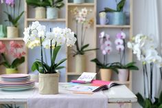 #Woonplantvandemaand december: #Phalaenopsis. De Phalaenopsis staat symbool voor verbondenheid, vrouwelijkheid, samenwerking, spiritualiteit, elegantie en eigenwaarde en is daarom een perfect #cadeau.