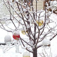 Speedy Holiday Decorating Idea: Outdoor Tree Ornaments | UTR Déco Blog
