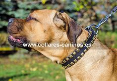Collar de tachuelas de acero sobre cuero natural para perros grandes y fuertes Cane Corso - C99