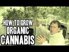 Garden educator John Kohler (of growingyourgreens.com) talks about growing cannabis #video