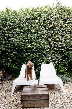 hello welsh terrier