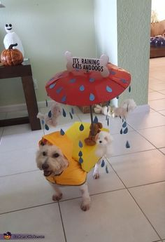 It's Raining Cats and Dogs ! Ha, get it? #Costume #halloween #DIY #doggy #puppy #pups #spooky #cute