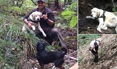 Firefighter Dan Estrada, pictured, found Sage lying in a mountain stream in Boulder Creek, California, more than a week after the 12-year-old dog, who is blind in both eyes, went missing.