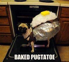 Pug Dog wearing a baked potatoe costume