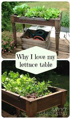 34 DIY Container Gardening Ideas - Container Gardening Ideas – DIY Lettuce Table – Easy Garden Projects for Containers and Growing - Veg Garden, Easy Garden, Balcony Garden, Garden Table, Garden Ideas No Sun, Vegetable Garden Container Ideas, Garden Beds, Country Garden Ideas, Organic Gardening