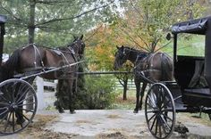 amish buggy: Horses and carriages tied to fence in Amish Country Ohio