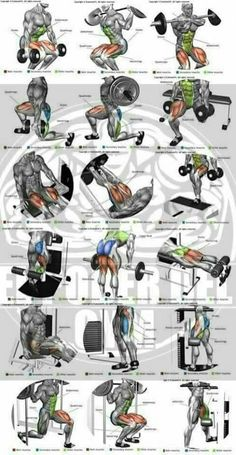 5 Muscle Building Exercises That You Should Do Make Muscle Building . - fitness en oefeningen -Top 5 Muscle Building Exercises That You Should Do Make Muscle Building . - fitness en oefeningen - Peito Chest workout at home for strength and mass Workout Names, Gym Workout Chart, Gym Workout Tips, Biceps Workout, Fitness Workouts, Workout Programs, Fun Workouts, Insanity Workout, Workout Fitness