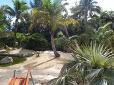 Tercera parte del Palmetum