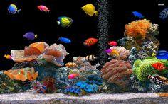 22 Ideas De Acuario Peces De Colores Fondo Acuario Fondo De Pantalla De Peces