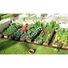 Com uma dieta vegetariana, cerca de 90% do que a família come vem do próprio quintal, que funciona como uma espécie de fazenda urbana. Saiba mais em blog.plantei.com.br
