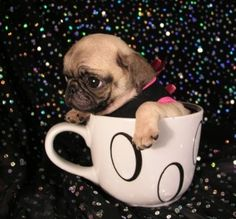 Pug wearing a vest, riding a tea cup through outer space?  Not sure what is going on here, but I think I like it.