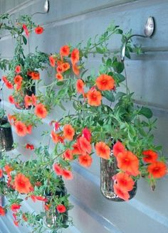 #1 Garden Hooks - 10 Brilliant DIY Projects to Repurpose Spoons. Don't care for the petunias, but def another flower
