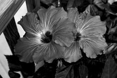 black and white flower photography |