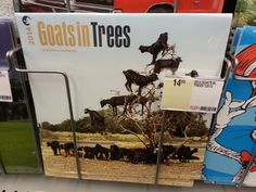 """10/24/13 - The, """"Goats in Trees"""" calendar.  Where has this been all my life?  Finally, an opportunity to spend 365 days in the coming year (2014) with Goats in Trees!"""