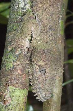 gecko camouflage.    http://vijaytamil.org/2012/10/super-singer-junior-3-15-10-12watch-super-singer-junior-3-15-10-12super-singer-junior-3-15th-october-2012/