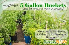 Urban Gardening, 5 Gallon Buckets, Gardening, Non-GMO