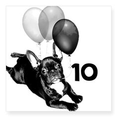 Birthday French Bulldog Sticker  Personalize with age, comes in clear style or white  #birthday #french #bulldog #stickers #dog #pet #animal #stickers #frenchis