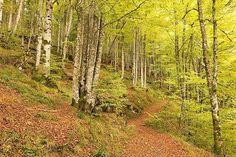 #selvadeirati #otoño