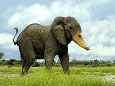 Haha an elephant duck.......