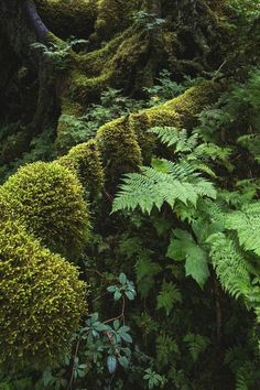 Forest woods moss and ferns
