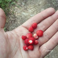 #wild #strawberries