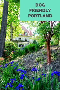 Travel the World: Portland Oregon has many outdoor attractions that are also dog friendly.