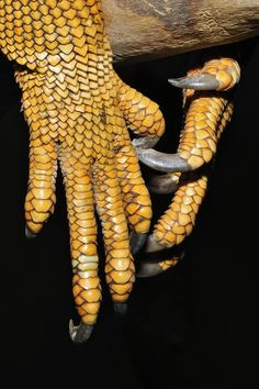 """Iguana Claws"" by Josef Gelernter I love the little hearts"