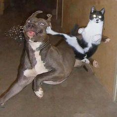 30 φωτογραφίες που αποδεικνύουν ότι οι γάτες είναι Νίντζα