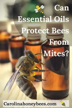 How can essential oils help bees. Learn how to use essential oils to promote good bee health. Essential oil recipes for beekeepers. Carolina Honeybees