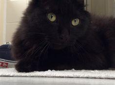 Pretty #blackcat