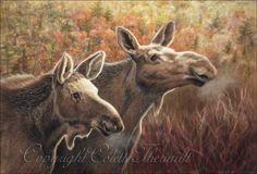 paintings of moose | Cow Moose Pastel Painting-North American wildlife art, paintings and ...