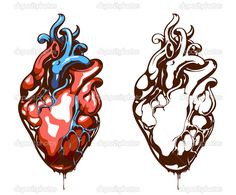 Anatomical heart isolated on white - Stock Illustration