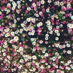 Flowers floral square wallpaper screensaver background