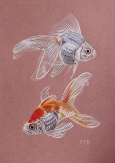 акварель золотая рыбка тату - Поиск в Google
