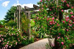 5 enredaderas de rápido crecimiento para adornar tu jardín - Hogar Total