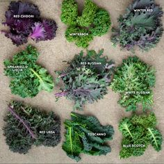 Add structure and color with different types of kale