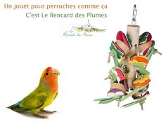 L'Epis Magique Parrot, Bird, Animals, Budgie Toys, Budgies, Parrots, Ears Of Corn, Magic, Parrot Bird