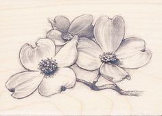 new ideas for dogwood tree tattoo ideas Tree Sketches, Flower Sketches, Flower Drawings, Floral Drawing, 3d Drawings, Dogwood Trees, Dogwood Flowers, Flowers Garden, Purple Flowers