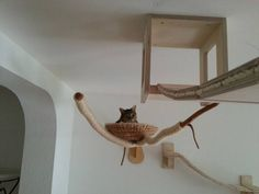 ceiling-furniture-for-cats-by-goldatze-gold-paw-15