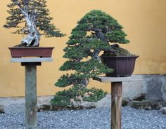 Image result for mirai bonsai kendall student