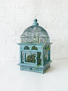 Planta de aire en la jaula del pájaro azul - teca angustiado vivo jardín