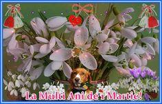 Felicitare de 1 Martie: Plants, Inspiration, Happy Birthday, Biblical Inspiration, Plant, Inspirational, Planets, Inhalation