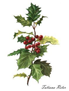 Ознакомьтесь с моим проектом в @Behance: «Watercolor Botanical illustration (2016)» https://www.behance.net/gallery/33197245/Watercolor-Botanical-illustration-(2016)