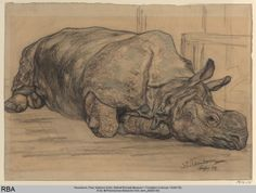 Paul Neuenborn, Rhinoceros, early 19th century. Wallraf-Richartz-Museum & Fondation Corboud