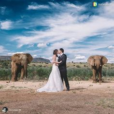 The perfect African inspired wedding at #askarilodge #magaliesberg #elephant #elephantphotobomb #africanwedding #amazingweddingphotos #weloveafricanweddings #africanbush #bushwedding #ido  Congratulations on being married for 6 months @sampage_90. We absolutely adore this photograph...thanks so much for sharing this special memory with us.