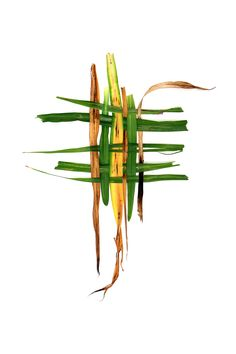 daylily leaves (mary jo hoffman)